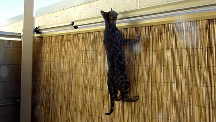 Система предотвращения побега котов